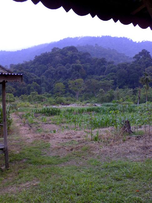 View from the cabins in the rainforest of Sumatra